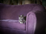 Couch Photos - Purple Resplendent by Mike Reid