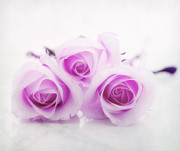 White Rose Prints - Purple roses Print by Kristin Kreet