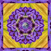 Mandala Photos - Purple Royalty by Bell And Todd