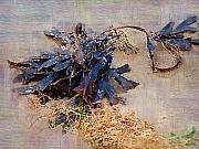 Seaweed Prints - Purple Seaweed Print by Deborah MacQuarrie