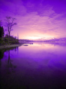 Tree Reflections Prints - Purple Skies Print by Tara Turner