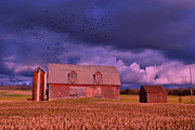 Farm Scenes Photos - Purple Sunset by Emily Stauring
