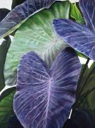 Acrylic. Green Prints - Purple Taro Print by Sandra Blazel - Printscapes