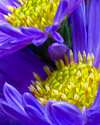 Macro Flower Photography Prints - Purple Twins Print by Don Keitz