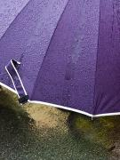 Rainy Day Photos - Purple Umbrella by Marion McCristall