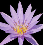 Florida Gulf Coast Posters - Purple Water Lily Poster by Kim Hojnacki