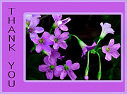 Floral Greeting Card Posters - Purple Wildflower Thank You Poster by Dianne Liukkonen