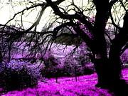 Amy Sorrell - Purplr Light