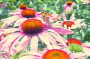 Summertime Mixed Media Prints - Purpur Garten Print by Angela Doelling AD DESIGN Photo and PhotoArt