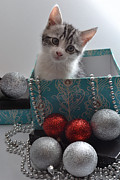 Kitty Originals - Purr-fect Christmas. by Terence Davis