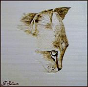 Kitty Pyrography Posters - Purrfect Study 2 Poster by Jo Schwartz