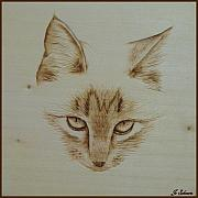 Sepia Pyrography - Purrfect Study by Jo Schwartz. Purrfect Study