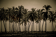 Coconut Palms Prints - Puuhonua o Honaunau Print by Kelly Wade