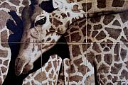 Giraffe Pyrography Originals - Puzzled by Jo Schwartz