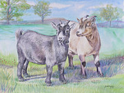 Enjoying Framed Prints - Pygmy Goats Framed Print by Gail Dolphin