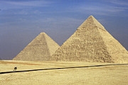 Camel Photos - Pyramids at Giza by Mark Greenberg