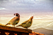 Roof Top Digital Art Prints - Quail and his Lady Print by Phyllis Kaltenbach