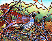 Nadi Spencer Posters - Quail Poster by Nadi Spencer