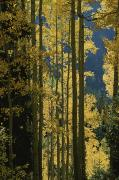 Quaking Aspen Posters - Quaking Aspen Trees Display Brilliant Poster by Marc Moritsch