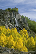 Verticals Prints - Quaking Aspen Waterfall - Eastern Sierra Print by Craig Lovell