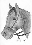 Western Pencil Drawings Posters - Quarter Horse Poster by Gunilla Wachtel