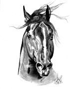 Quarter Horse Drawings Framed Prints - Quarter Horse Head Shot in Bic Pen Framed Print by Cheryl Poland