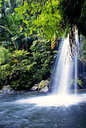 Lush Vegetation Posters - Quebrada Juan Diego Waterfall Poster by Thomas R Fletcher