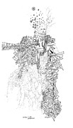 Fine Line Drawings Posters - Queen of the Afternoon Poster by Regina Valluzzi