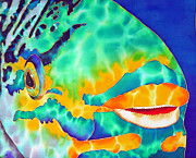Psrrotfish Print On Canvas Tapestries - Textiles Prints - Queen Parrotfish Print by Daniel Jean-Baptiste