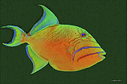 Triggerfish Art - Queen Triggerfish 2 by Larry Linton