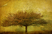 Margaret Hormann Bfa Metal Prints - Quercus Robur Metal Print by Margaret Hormann Bfa