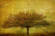 Margaret Hormann Bfa - Quercus Robur