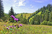 Carpathian Mountains Posters - Quiet day on the Carpathian Poster by Alain De Maximy