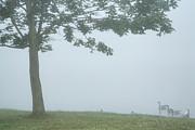 Quiet Fog Rolling In Print by Karol  Livote
