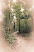 Earth Tone Prints - Quiet Shaded Path in the Woods Print by Alan Pare