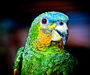 Parrot Metal Prints - Quinny Metal Print by Laura M. Vear