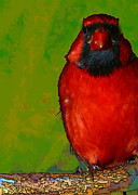 Modify Posters - Quirky Cardinal Poster by Gregory Scott
