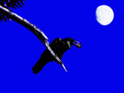 Perigee Moon Prints - Quoth The Raven Nevermore . Blue Print by Wingsdomain Art and Photography