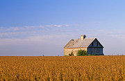 Bluesky Prints - R1014h-ilbr-Soybean field and barn Print by Chris Aquino