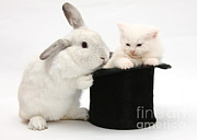 Magic Hat Photos - Rabbit And Kitten In Top Hat by Mark Taylor