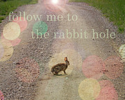 Carol Phipps - Rabbit Hole