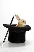 Magic Hat Photos - Rabbit In Hat With Magic Wand by American Images Inc