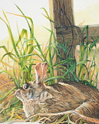 Hiding Drawings Prints - Rabbit Print by John Forker