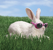 Attitude Photos - Rabbit With Sunglasses by George Caswell