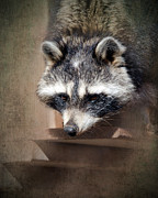 Raccoon Prints - Raccoon 3 Print by Betty LaRue