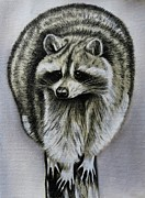 North American Wildlife Pastels - Raccoon by Lucy Deane