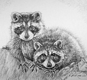 Kaelin Drawings Posters - Raccoon Pals Poster by Roy Kaelin