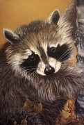 Whiskers Pastels Metal Prints - Raccoon Metal Print by Patricia Ivy