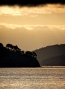Sausalito California Metal Prints - Raccoon Strait Metal Print by John  Hamlon