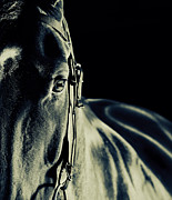 Thoroughbred Gelding Prints - Racehorse 5 Print by James Callaghan